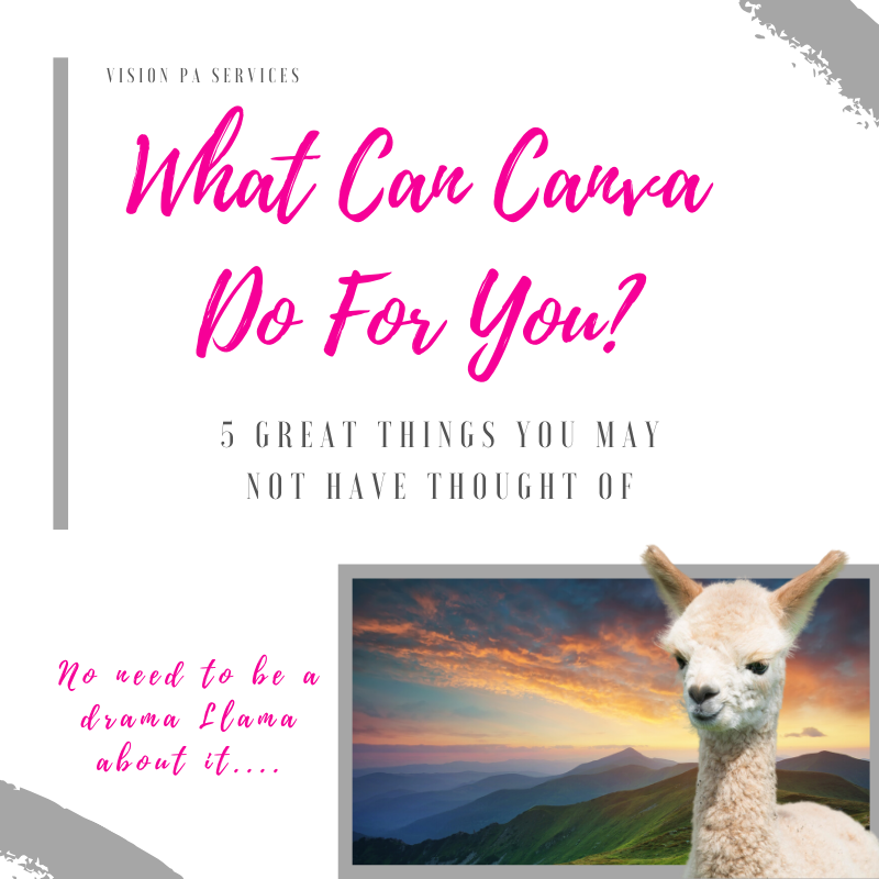 things canva can do for your business